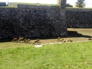muralla-ciudadela-de-jaca