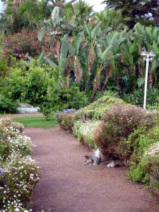 playa jardin gatitos